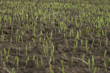 Aeration and Over-Seeding